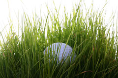 Ball for a golf Royalty Free Stock Photography
