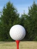 Ball for a golf. On a background of trees Stock Image