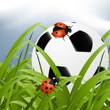 Ball between grass Stock Images