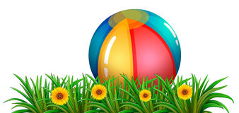A ball near the green plants with flowers Stock Photos