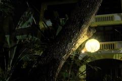 Ball-shaped glowing lantern hanging on a tree bough. Night scene.  royalty free stock photos