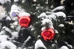 Ball in the snow on the Christmas tree. Royalty Free Stock Image