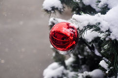 Ball in the snow on the Christmas tree. Royalty Free Stock Photo