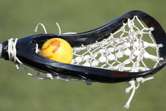 Ball and Stick. A lacrosse ball rests in a woman's stick Stock Image