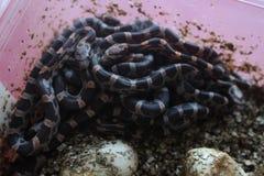 Ball von Babyschlangen lizenzfreie stockbilder