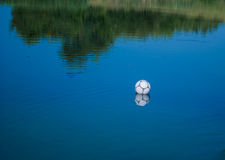 Ball in water Royalty Free Stock Photography