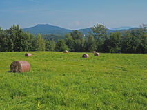 Balla della paglia sul prato dell'erba verde con l'albero, le colline ed il cielo blu Immagine Stock