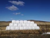 Balla di fieno asciutta nel sacchetto di plastica bianco, campo di agricoltura sul cielo soleggiato, natura rurale nella terra de Fotografia Stock