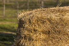 Balla di fieno azienda agricola di agricoltura e simbolo di azienda agricola di tempo di raccolto Immagine Stock