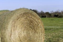 Balla di fieno rotonda con il bestiame nei precedenti immagini stock