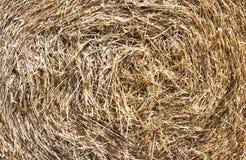 Balla di fieno rotonda nella campagna, struttura immagine stock