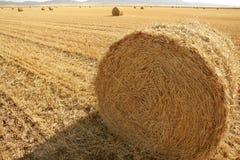 Balla rotonda del fieno del cereale secco del frumento Immagine Stock