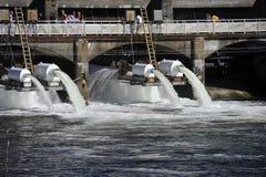 Ballard Locks, Seattle, U.S.A. Fotografia Stock Libera da Diritti