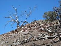 Ballast-Baum-Landschaft Stockfoto