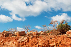 Ballast-Dragon Blood-Bäume und Flaschenbäume im Socotra, der Jemen Stockfotos