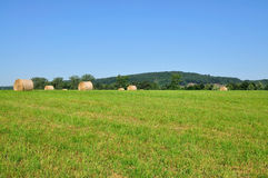 Balle de blé. Images stock