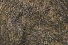 Balle de foin d'herbe sèche Photo stock