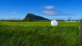 Balle de foin enveloppée dans l'aluminium en plastique, Norvège images libres de droits