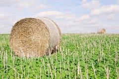 Balle de foin sur des terres cultivables Images stock