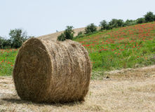 Balle de foin sur le champ après récolte Images libres de droits