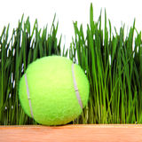Balle de tennis sur le fond d'herbe Photos libres de droits