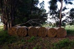 6 balle dell'erba Fotografia Stock