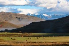 Balle dell'erba del campo dell'azienda agricola della neve delle montagne Immagine Stock