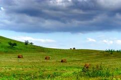 Balle della collina e di fieno dell'erba verde Fotografia Stock