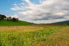 Balle della collina e di fieno dell'erba verde Immagini Stock Libere da Diritti