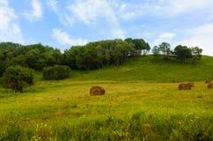Balle della collina e di fieno dell'erba verde Fotografie Stock