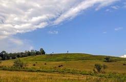 Balle della collina e di fieno dell'erba verde Fotografie Stock Libere da Diritti
