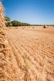 Balle della paglia alla regione della Loira, Francia Balle di fieno sul fi Fotografia Stock Libera da Diritti