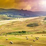 Balle della paglia dopo il raccolto in Sicilia Immagine Stock