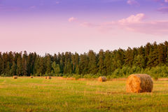 Balle della paglia nel campo di autunno Immagini Stock