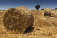 Balle della paglia su un campo di frumento raccolto Fotografia Stock Libera da Diritti