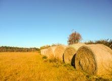 Balle della segale in un campo nel sud Immagine Stock