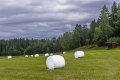 Balle di fieno bianche nella campagna finlandese vicino a Turku, Finlandia Immagine Stock