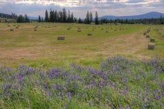 Balle di fieno dell'Idaho Fotografia Stock Libera da Diritti