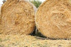 Balle di fieno dorate in un campo all'aperto immagini stock libere da diritti