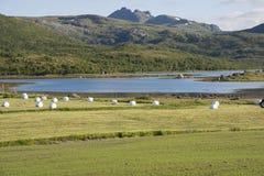 Balle di fieno a Eggum in Norvegia Immagine Stock