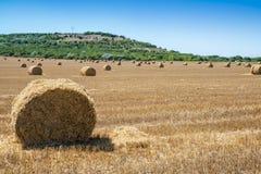 Balle di fieno fresche sul campo durante l'estate Fotografia Stock