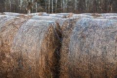 Balle di fieno multiple su un campo Fotografia Stock Libera da Diritti
