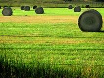 Balle di fieno nel campo dell'azienda agricola Fotografia Stock Libera da Diritti