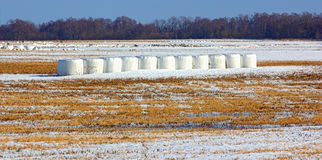 Balle di fieno nell'inverno Fotografia Stock Libera da Diritti