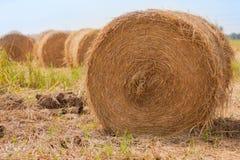 Balle di fieno nelle risaie dopo il raccolto immagini stock libere da diritti