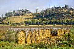 Balle di fieno organizzate nella regolazione rurale, Tasmania Fotografia Stock Libera da Diritti