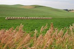 Balle di fieno su terreno coltivabile Immagini Stock