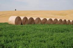 Balle di fieno su terreno coltivabile Fotografia Stock