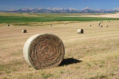 Balle di fieno su terreno coltivabile Immagini Stock Libere da Diritti
