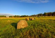 Balle di fieno in un campo dell'azienda agricola Fotografia Stock